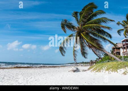 Tulum, Yucatan, Riviera Maya. Plage de Tulum avec de beaux palmiers, mer des Caraïbes au Mexique.