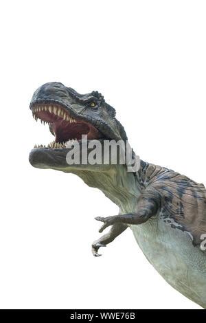 Tyrannosaurus rex isolé sur fond blanc. Tyrannosaurus rex est un dinosaure carnivore vivait en période du crétacé. Dinosaures les plus célèbres jamais. Banque D'Images