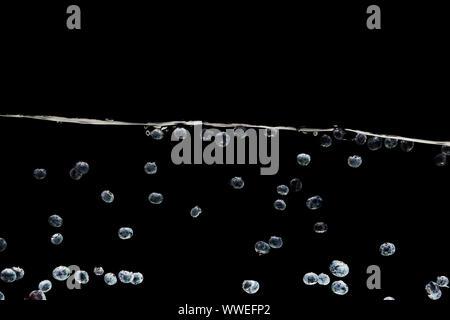 Les bleuets frais mûrs dans l'eau profonde isolated on black Banque D'Images