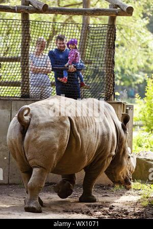 Famille à la recherche d'un rhinocéros blanc (Ceratotherium simum), zoo, Dortmund, Germany, Europe Banque D'Images