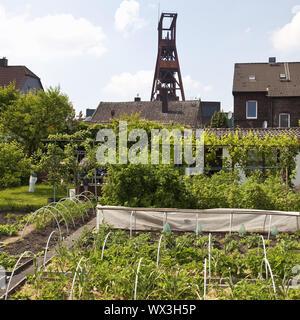 Kleingärtnerverein Sorgenfrei Wanne-Eickel e.V. avec le bâti du convoyeur de la mine de Pluton, Herne Banque D'Images