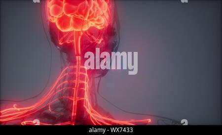 Examen radiologique du cerveau humain