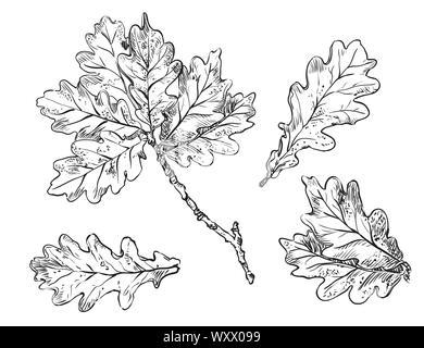 Vector dessin à la main ensemble de feuilles de chêne monochrome contours sur le fond blanc. Ligne de chute du feuillage art illustration stock. Banque D'Images