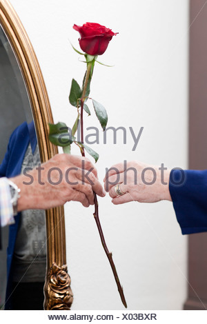 Un vieil homme donne une rose à une vieille femme Banque D'Images