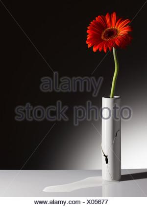 Fleur rouge en vase brisé Banque D'Images