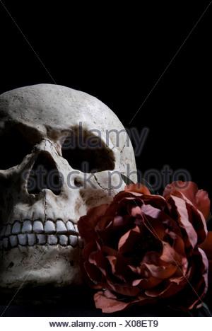 crâne et rose Banque D'Images
