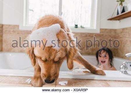 Fille de baignoire avec golden retriever dog Banque D'Images