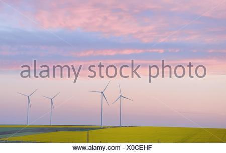 Champ éolien et les éoliennes au coucher du soleil. Banque D'Images