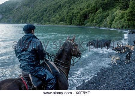 Bagualeros, cow-boys qui, de l'élevage sauvage capture lasso un taureau qui essaie de s'échapper dans la mer. Banque D'Images