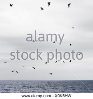 Vol de mouettes au-dessus de la mer Banque D'Images