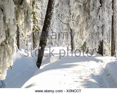 Allemagne, Basse-Saxe, Schleswig-Holstein, paysage enneigé, sur la Clausthaler Flutgraben, le ski de fond dans le Harz sur l'Wolfswarte Hanskühnenburg à Banque D'Images