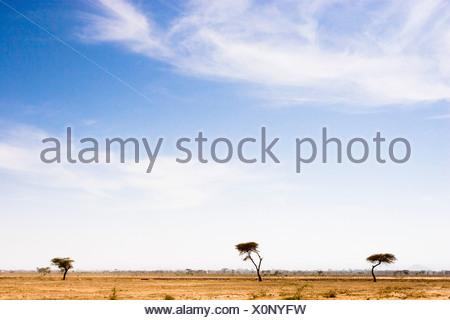 L'Éthiopie; vue panoramique sur les arbres sur du Banque D'Images