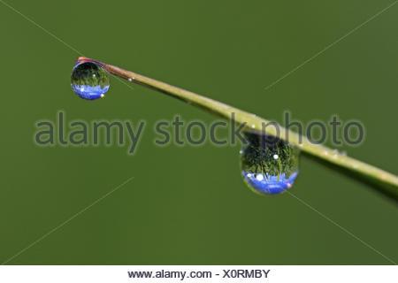 Les gouttes d'eau à un brin d'herbe, de l'Allemagne, Bade-Wurtemberg Banque D'Images