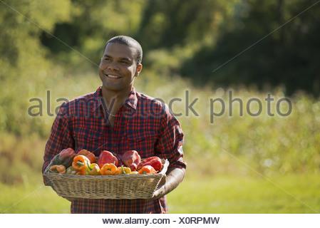 Woodstock, New York USA agriculteur avec bac de poivrons bio Banque D'Images