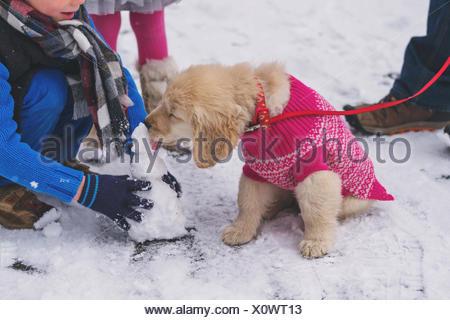 Chiot golden retriever dog wearing sweater rose mini lécher snowman