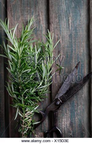 Herbes fraîches Banque D'Images