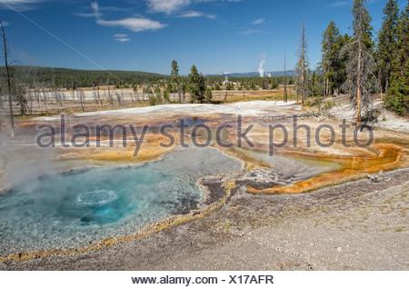 Les geysers et les sources chaudes sur le lac Firehole, Yellowstone National Park, Wyoming, USA Banque D'Images