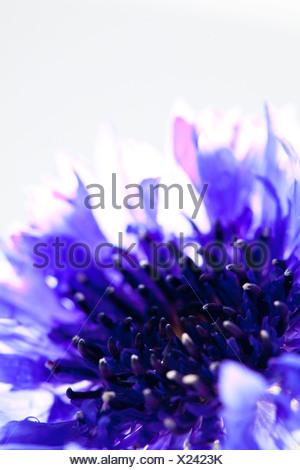Fleur sur fond blanc Banque D'Images