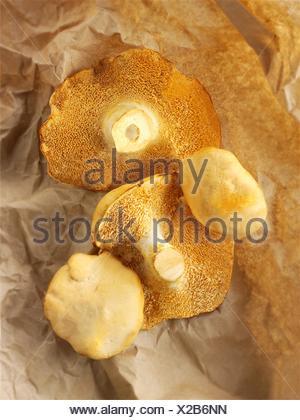 Organique a wiild Pied de mouton (Hydnum repandum) Champignons hérisson ou les champignons. Banque D'Images