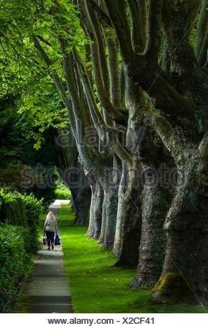 Promenade bordée d'arbres, Kerrisdale