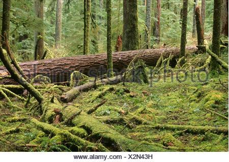 Forêt ancienne la vallée des géants zone naturelle exceptionnelle