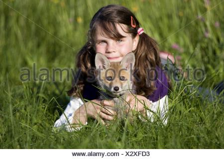 Les jeunes européens red fox Banque D'Images