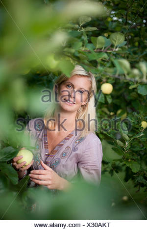 Portrait of mid adult Woman picking apples from tree Banque D'Images