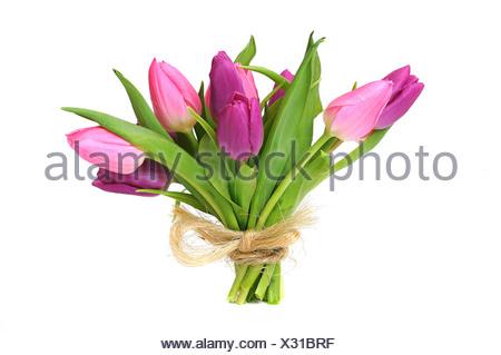 Bouquet de tulipes (Tulipa)