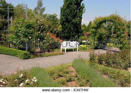 Banc de jardin blanc dans le chemin de gravier en face de rosiers en ...