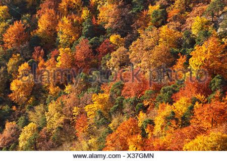 Forêt mixte d'automne dans la vallée près de Dürnstein, vallée de la Wachau, région de Waldviertel, Basse Autriche, Europe Banque D'Images