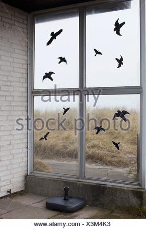 Volée d'oiseaux noirs peints sur window Banque D'Images