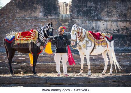 Chevaux Marwari. Paire de chevaux décorés avec fier propriétaire. Le Rajasthan, Inde Banque D'Images