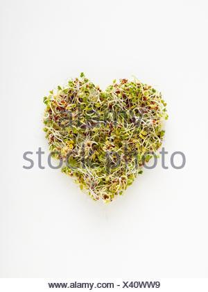 La germination des haricots dans un bol en forme de coeur sur fond blanc. Banque D'Images