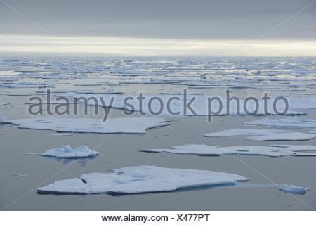 La banquise, mer du Nord, l'océan Arctique, l'Arctique, Banque D'Images