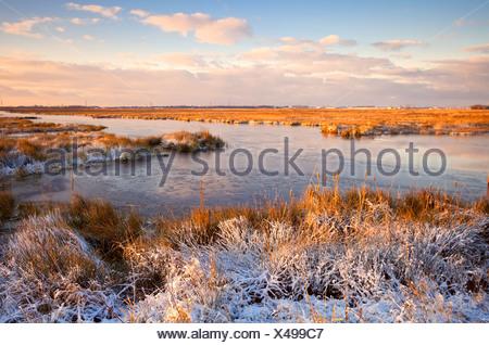 Lever de soleil sur l'hiver au marais Banque D'Images
