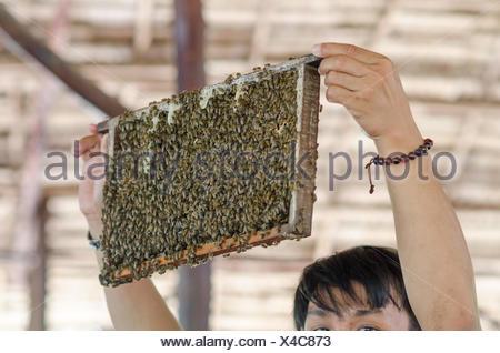 Vietnam, Can Tho, dans le Delta du Mékong beehive Banque D'Images