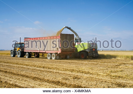 Agriculture - la paille de riz, une récolte de la biomasse, est récolté pour être utilisé comme biocarburant / nord de la Californie, USA. Banque D'Images