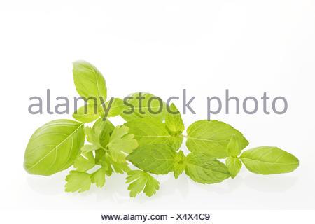 Bio culinaires herbes naturelles. Banque D'Images