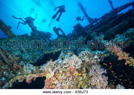 Plongeurs sous-couvert de corail d'un naufrage, la mer Rouge, Marsa Alam, Egypte Banque D'Images