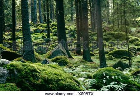 Vue de la forêt couverte de mousse Banque D'Images