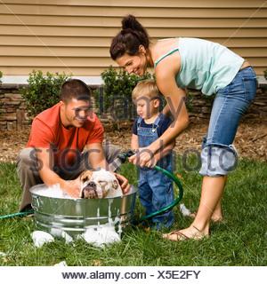 Caucasian family avec petit garçon lave-Bulldog Anglais in backyard Banque D'Images