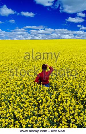 Un agriculteur donne sur un champ de colza en fleurs qui s'étend à l'horizon, Tiger Hills, Manitoba, Canada