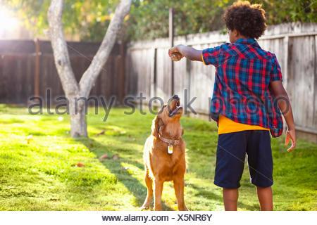 Boy holding up ball pour son chien dans le jardin arrière Banque D'Images