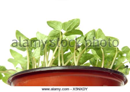 Les jeunes plantes dans le pot Banque D'Images