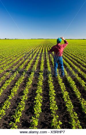 Un agriculteur dans son champ de soja en début de croissance près de Lorette, Manitoba, Canada Banque D'Images