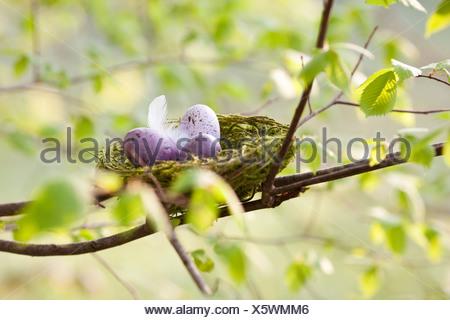 Oeufs dans le nid d'oiseau Banque D'Images