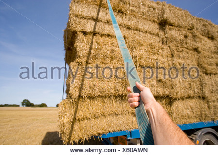Chargement d'agriculteurs sur des bottes de paille pour