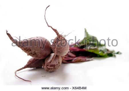 Bundle de betterave avec des feuilles sur fond blanc Banque D'Images