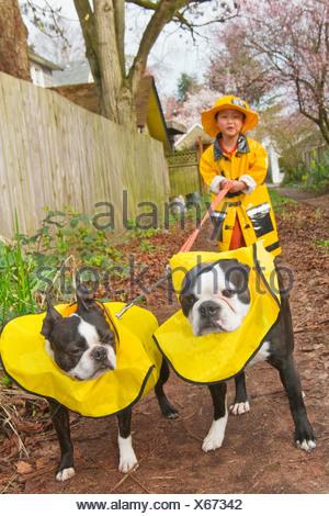 Asian boy walking dogs dans d'imperméables Banque D'Images