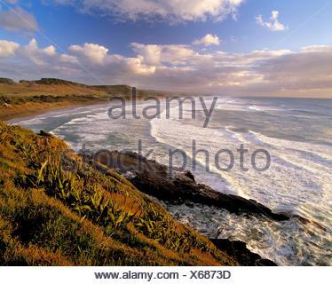 La Nouvelle-Zélande. île du nord Auckland. région. muriwai beach. Banque D'Images